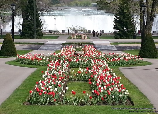 tulips in Niagara